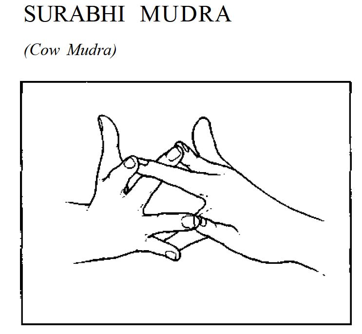 surabhi cow mudra