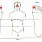 12.1 pituitary gland img