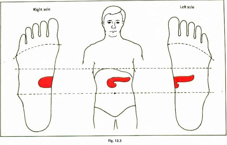 12.3 pancreas diabetes mellitus img