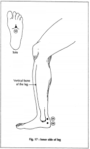 17 inner side of leg