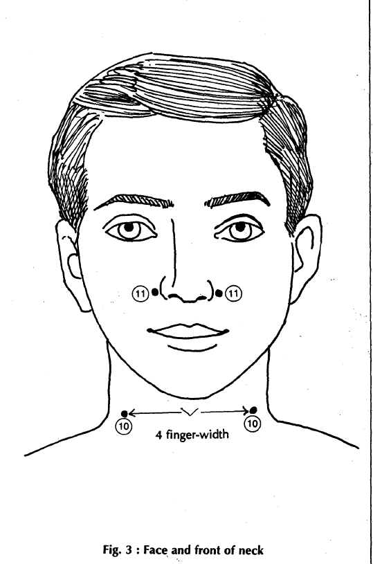 3 face and front of neck
