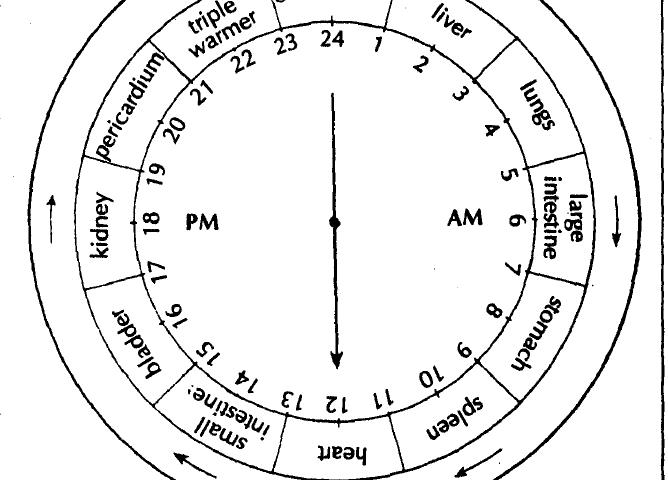 Organ Clock Flow Of Bio Energy Learn Self Healing