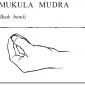 36 mukula beak hand mudra