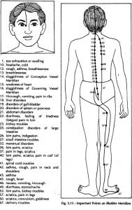 4 bladder meridian 3.15