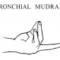 4 bronchial mudra