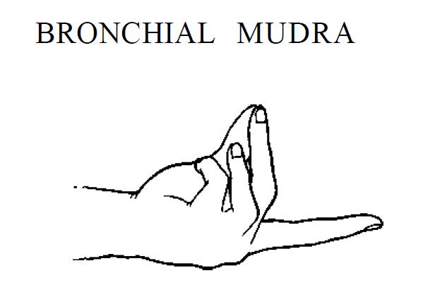 4 bronchial mudra