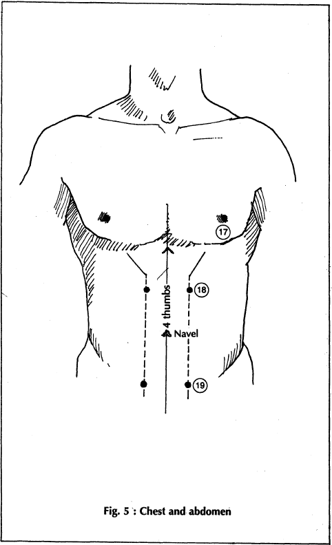 5 chest and abdomen