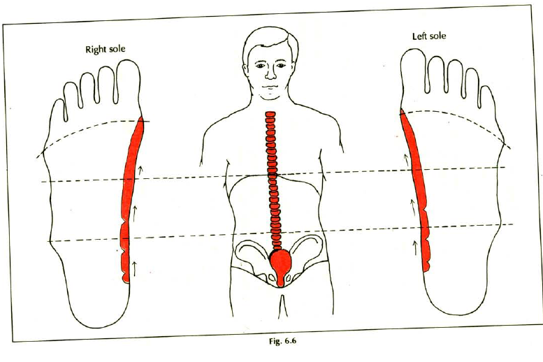 6.6 back spine pain stiffness lumbago sciatica img