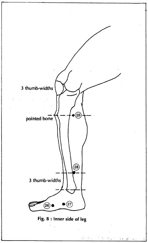 8 inner side of leg