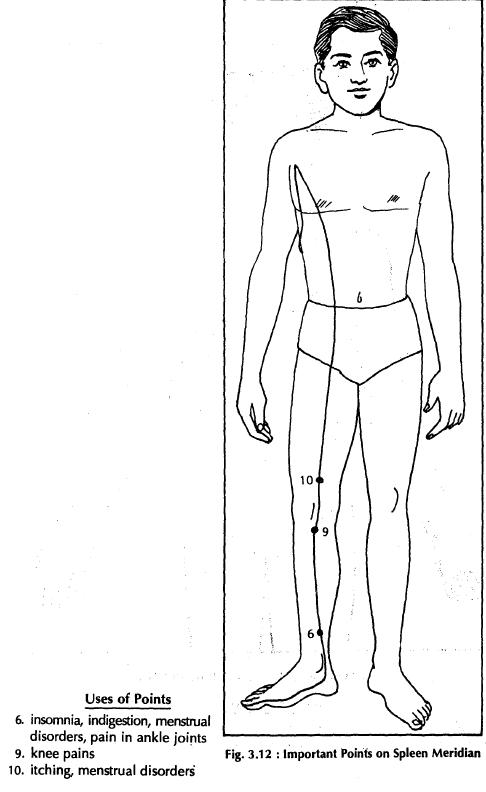 8 spleen meridian 3.12