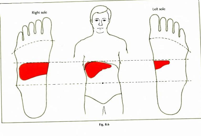8.6 liver jaundice hepatitis img