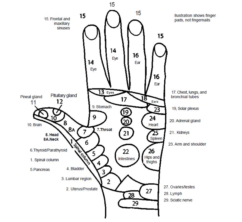 hand reflexology 3