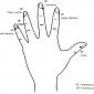 hand reflexology 6