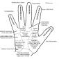 palmistry 7