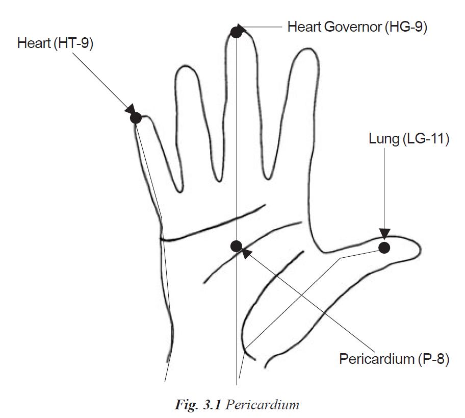 3.1 pericardium