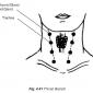 4.41 throat glands