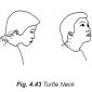 4.43 turtle neck