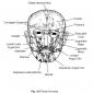 4.6 facial muscles