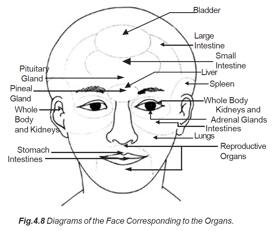 facial wrinkles organs diagram
