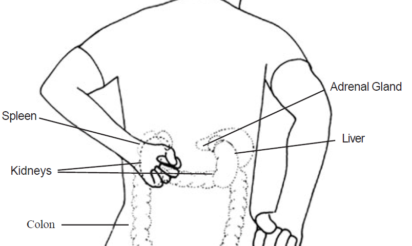 Hit The Area Of Eight Sacral Holes And Hiatus 8 Learn Self Healing