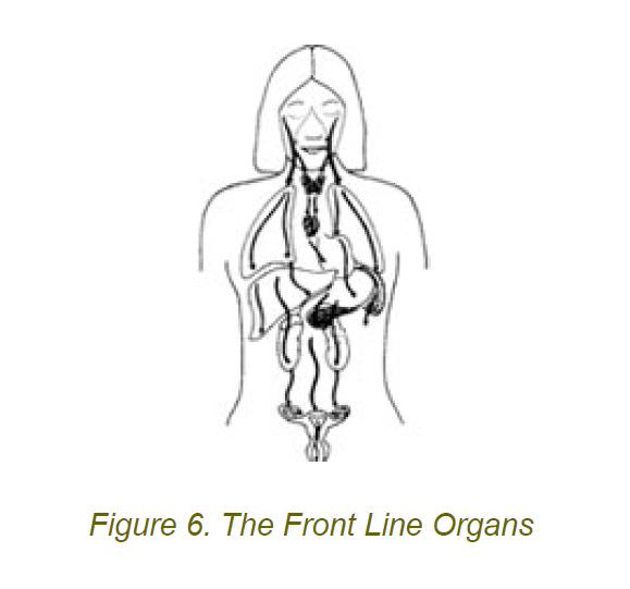 6 front line organs