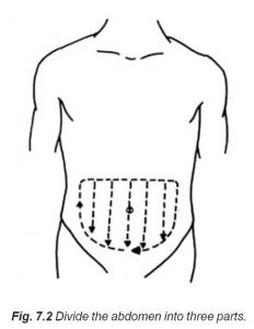 7.2 divide abdomen into three parts