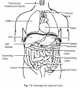 7.4 massage the sigmoid colon