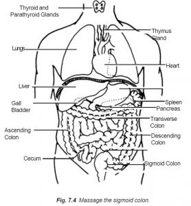7.4 massage the sigmoid colon