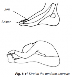 8.11 stretch the tendons exercise