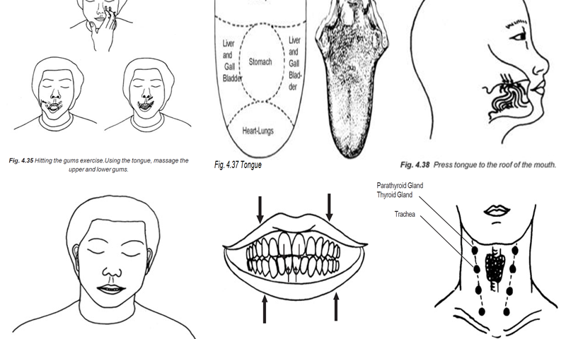 Gums, Tongue, Teeth