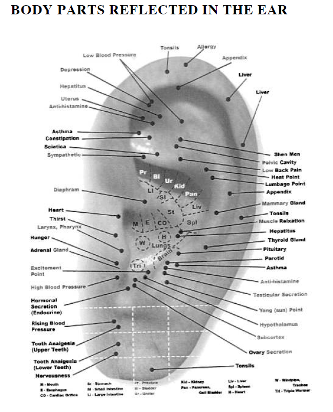 body parts reflected in the ear 14