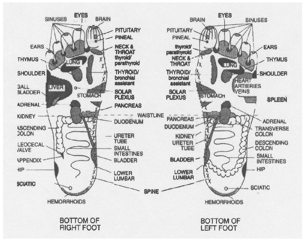 organs to foot reflexology