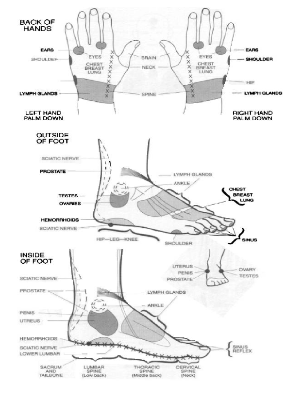 Reflexology learn self healing techniques online organs to hand and feet reflexology 10 ccuart Image collections