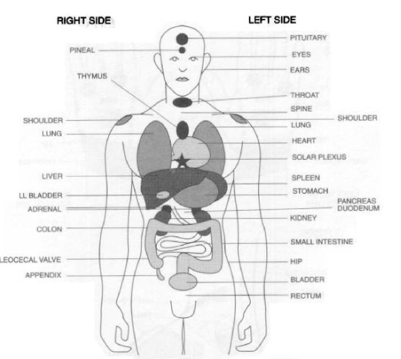 reflex point to organs