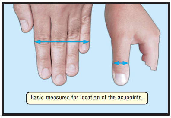 basic measures for location of the acupoints 1