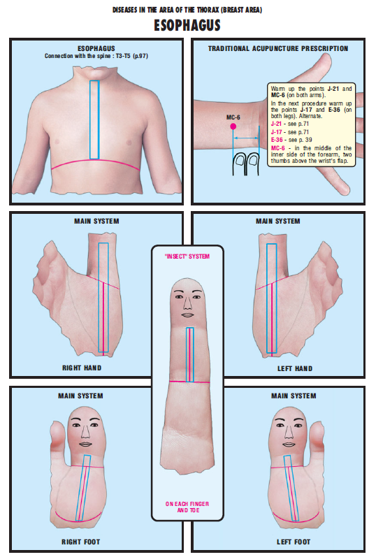esophagus 26