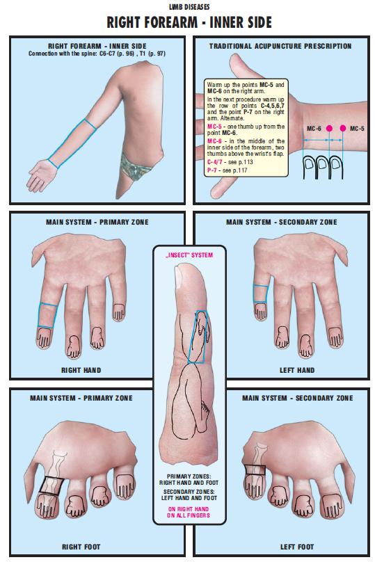 right forearm inner side 52