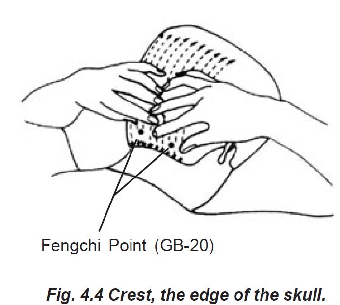 4.4 crest the edge of the skull