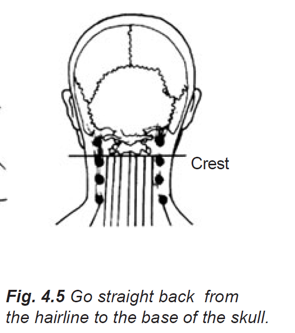 4.5 from hairline to base of skull