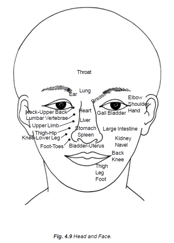 4.9 corresponding organs to head and face