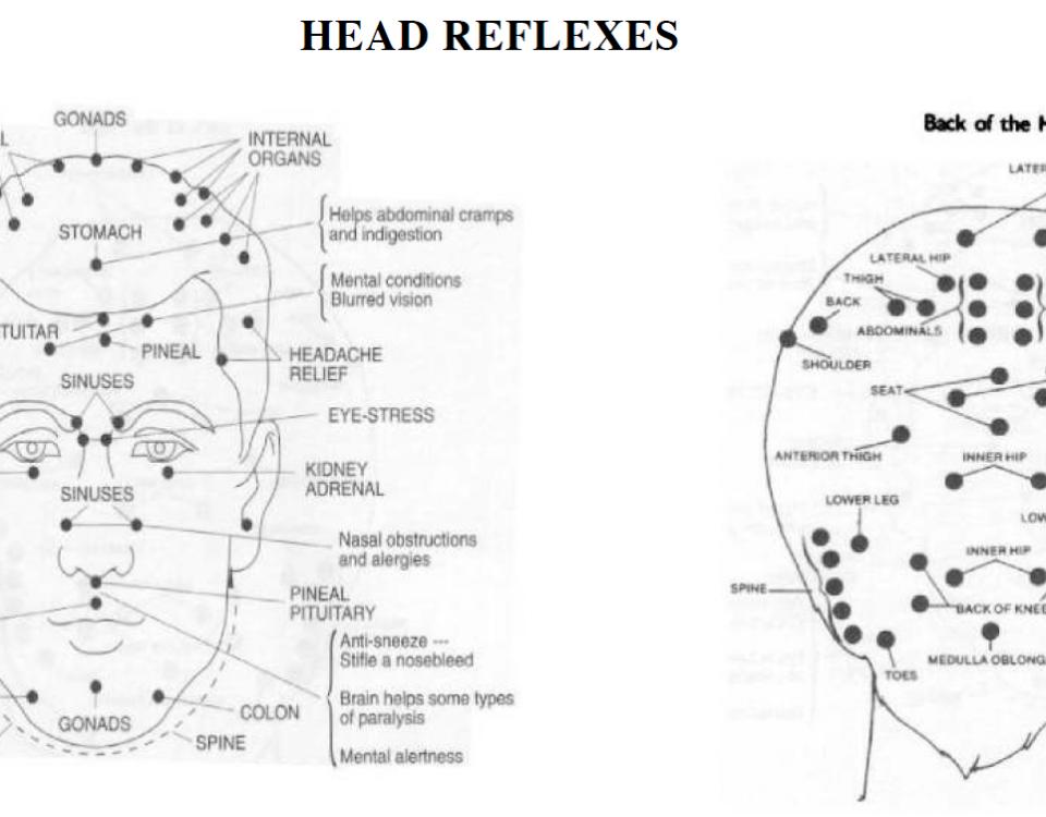 reflex points in the head 13